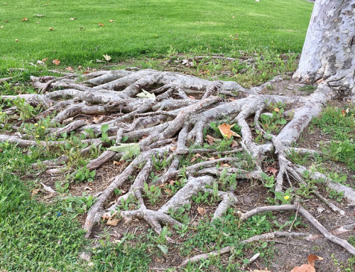 How to Keep Tree Roots from Growing Into Sewer Lines